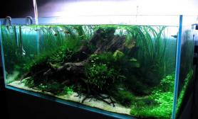水草缸造景沉木水草泥化妆砂青龙石120CM尺寸设计67