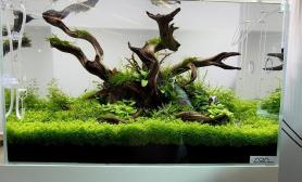 沉木青龙石水草造景60CM尺寸设计22