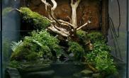 水草造景作品:水草造景(90cm)-42