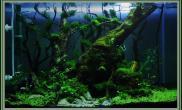 水草缸造景沉木水草泥化妆砂青龙石45CM及以下尺寸设计54