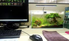 水草造景办公桌上的小花园-我的小缸造景