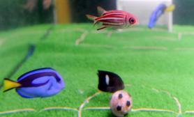 """日本举行""""刺尾鱼""""足球赛鱼缸中的绿茵场(图)"""