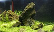 简单清爽的石景缸水草缸绝佳的视觉享受